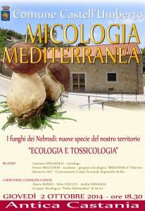 locandina-funghi